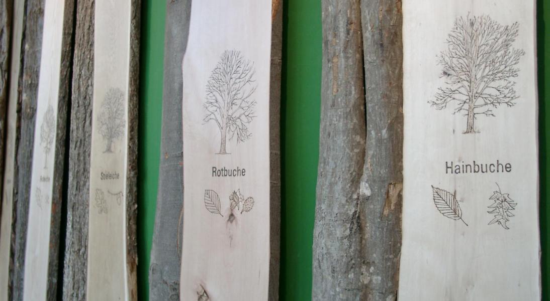 Holz und Rinde heimischer Laubbäume