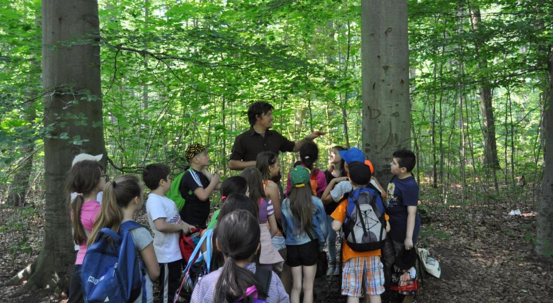 Führung mit Kindern durch den Siebentischwald